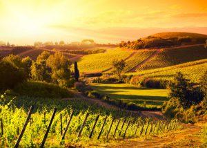 Il mondo del vino: dalla vigna alla tavola
